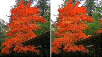 2008-3D紅葉3.jpg