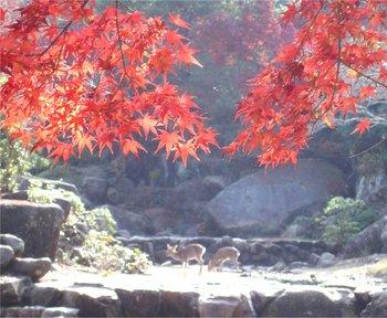 宮島-013鹿3.jpg
