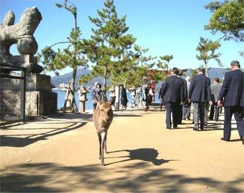 宮島-013鹿4.jpg