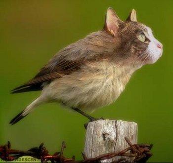 拾い物-鳥猫01.jpg